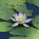 Mindfulness Based Stress Reduction: 8-week course and mini-retreat, Broome WA