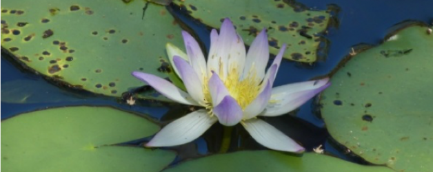 NEW! Mindfulness Based Stress Reduction Course